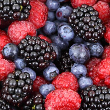 Food forest blueberries raspberries 87818
