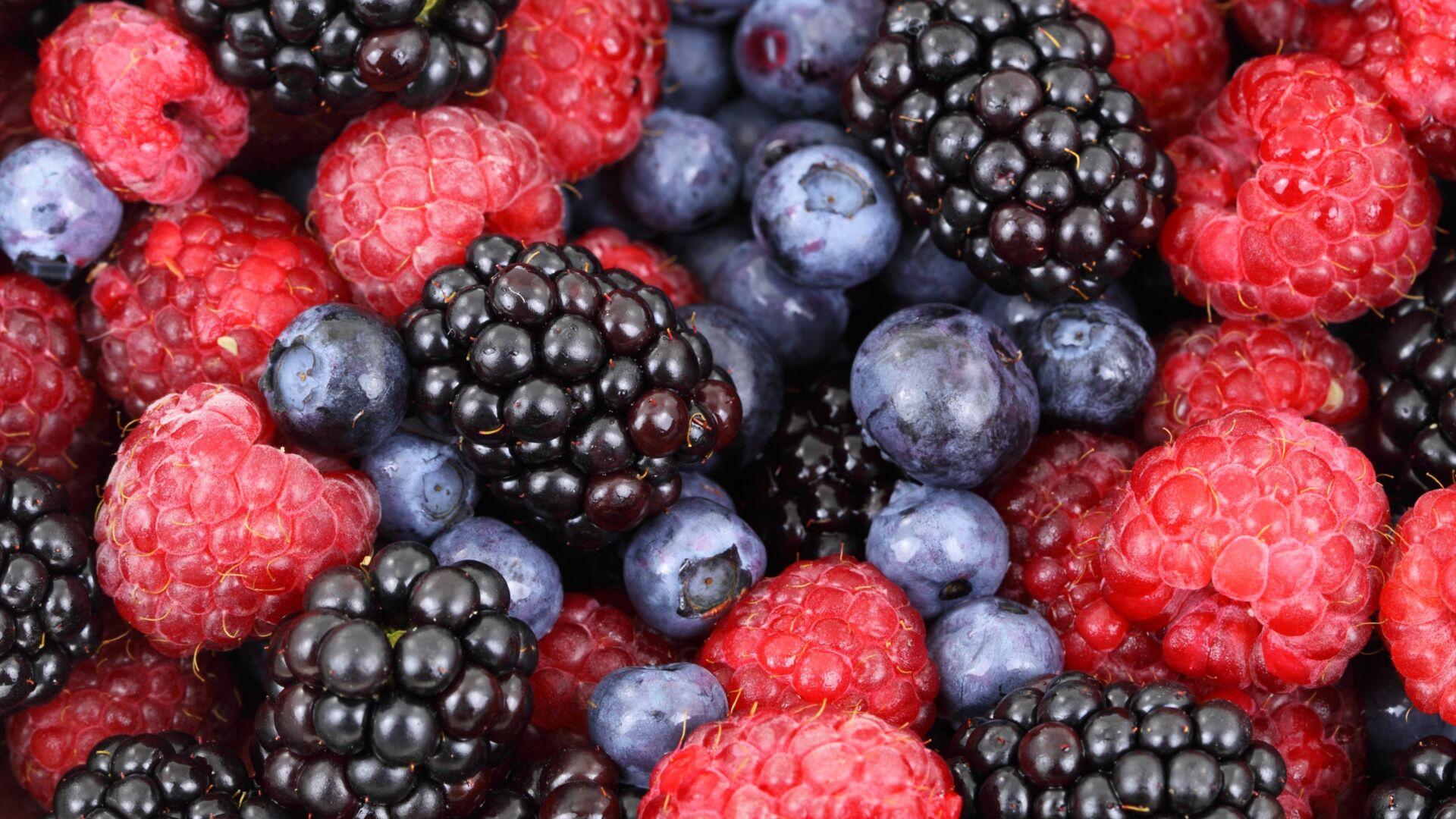 Food forest blueberries raspberries 87818
